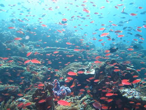 「コモド島 ダイビング」の画像検索結果